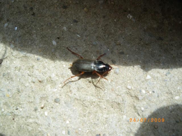 Insecte dans maison images - Insecte rampant maison ...