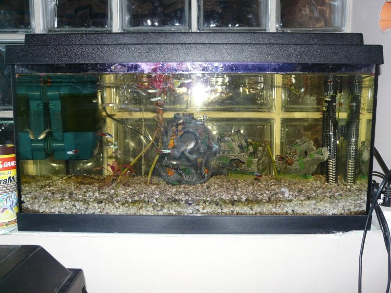 mes aquariums