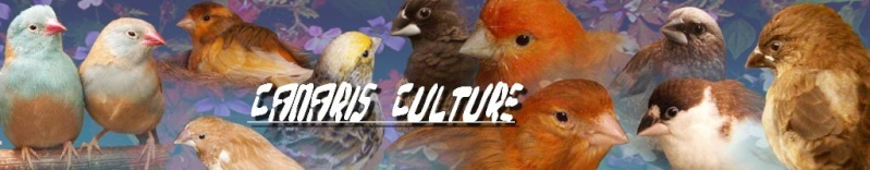 Canaris Culture