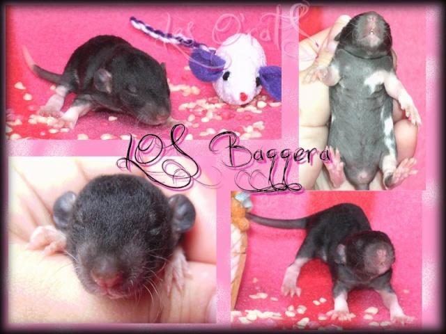bagger10.jpg