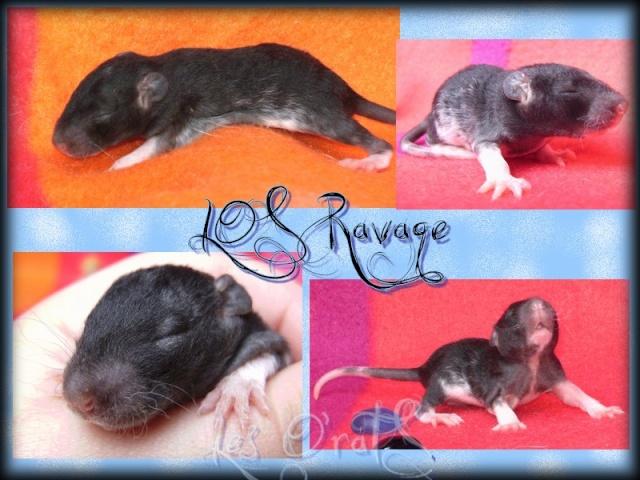 ravage10.jpg