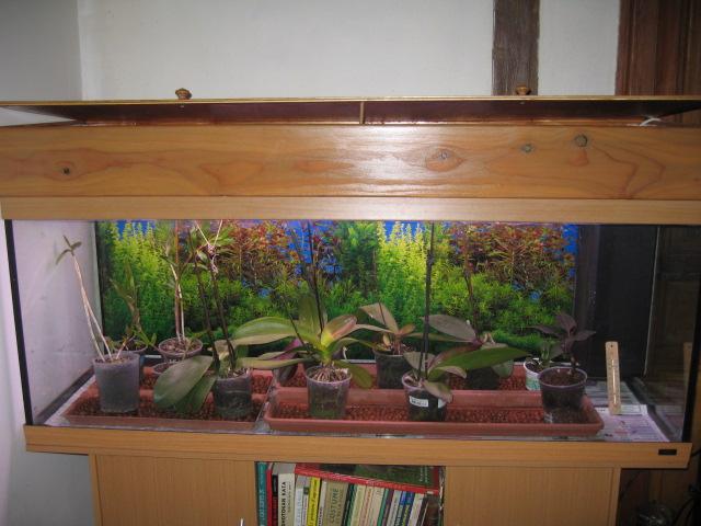 conversion d 39 un aquarium en terra orchid es. Black Bedroom Furniture Sets. Home Design Ideas