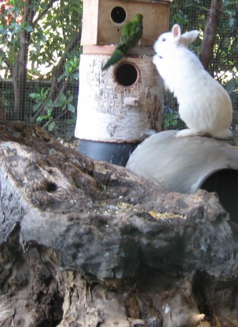 Savez vous comment construire un pi ge serpent yahoo questions r ponses - Piege a serpent ...