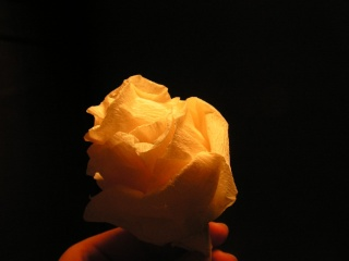 fleurs23
