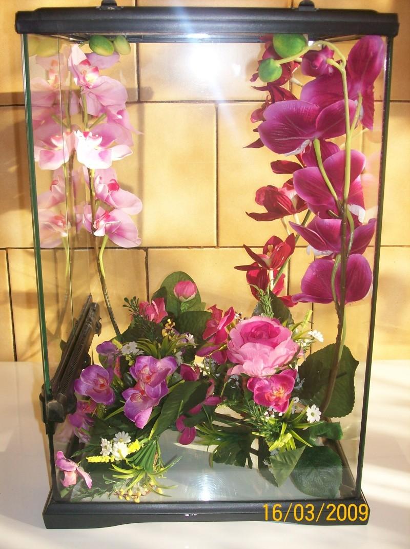 orchidee terrarium