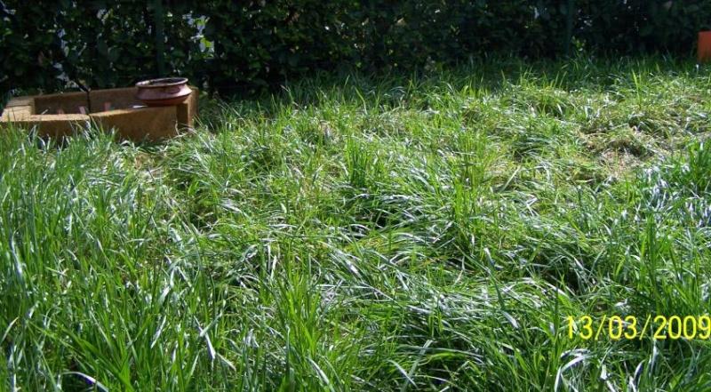 Erba del giardino come materiale da nido - Quando seminare erba giardino ...