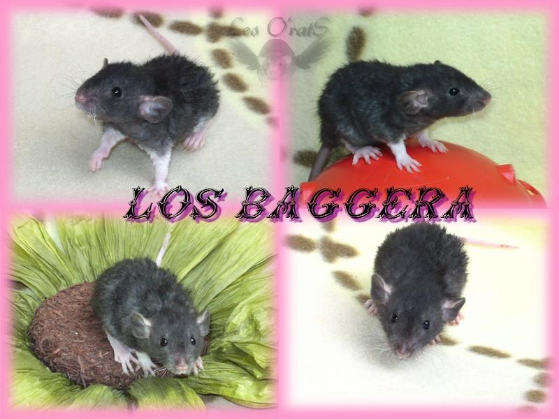 bagger12.jpg