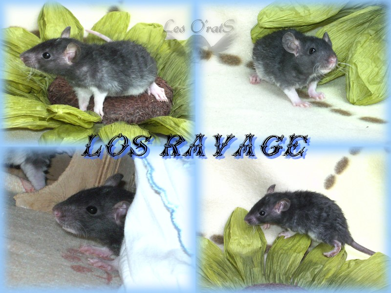 ravage12.jpg
