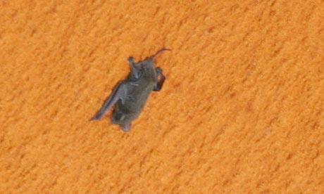 bat-cl10.jpg