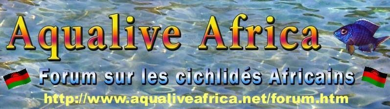 aqualiveafrica.net
