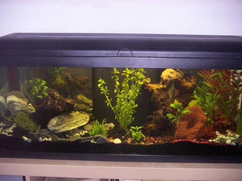Les racines de mon aquarium for Racine aquarium