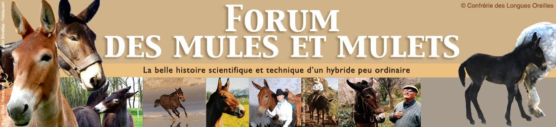 Le forum des mules et mulets