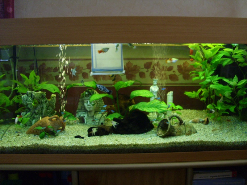 mon aquarium de 180 litres. Black Bedroom Furniture Sets. Home Design Ideas