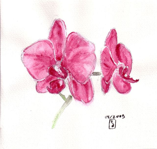 Orchid e - Dessin d orchidee ...